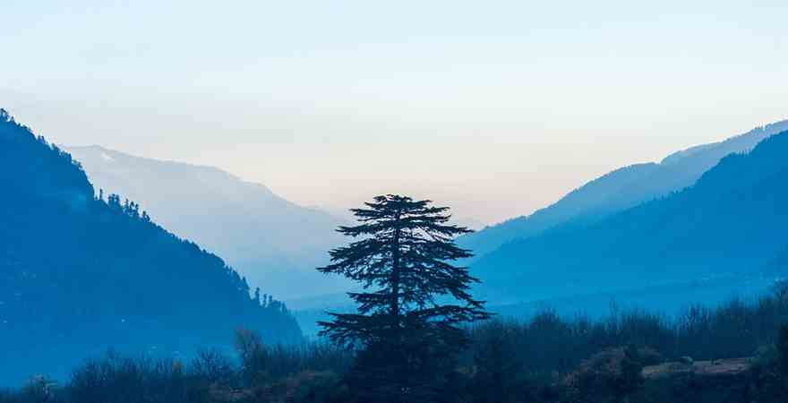 Best Best Hotels in Manali for Honeymoon