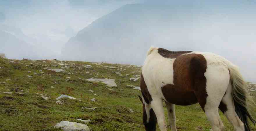 Manali - Experience Mesmeric & Magnetic hill station of India