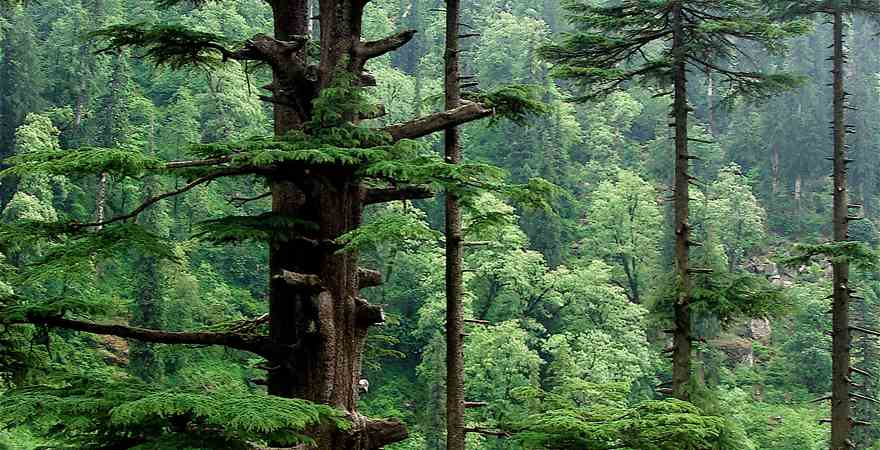 Manali - A Popular Holiday Hill Destination in India